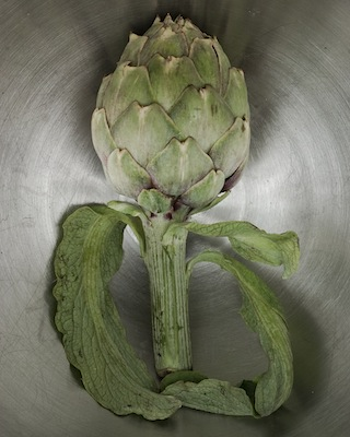 Full Length Artichoke, Color.