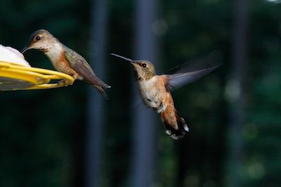 Angry Birdie