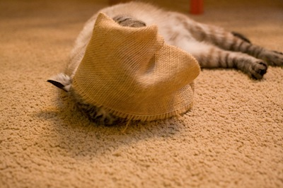 Cat + Burlap Bag + Catnip