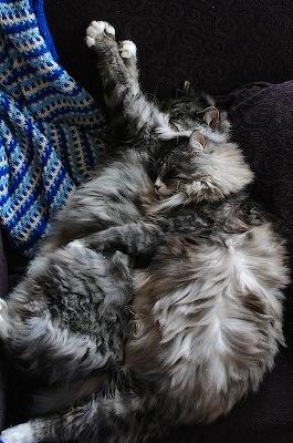 cuddlysleepycat