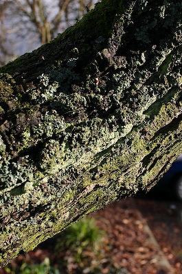 trunk with lichen
