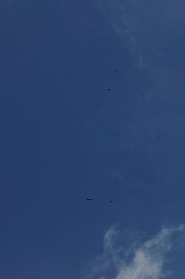 5 eagles
