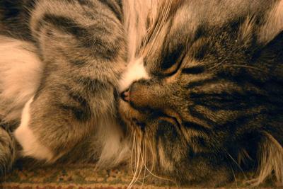 Cat, 1/4 sec, handheld