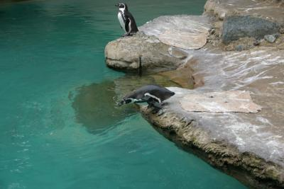 Penguin belly flop