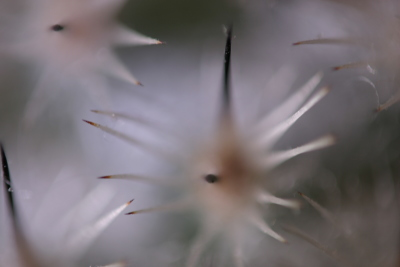 out of focus spikes