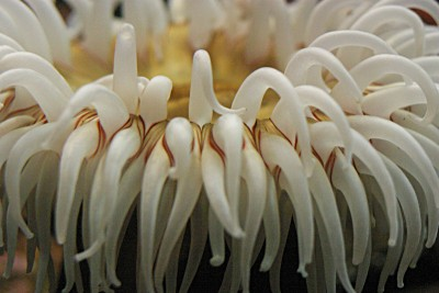 anenenenome, up close