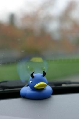 duck blue devil