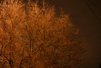 tree, night light