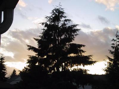 sky- with tree