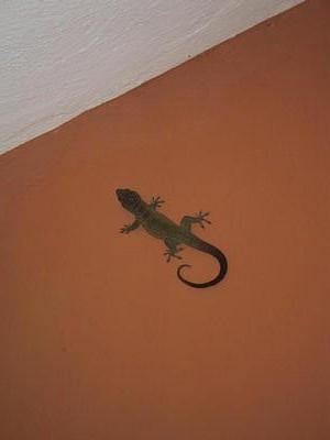 Our rather fat Gecko. He stayed on the wall for 3 or 4 days, only moving about a foot in all that time.