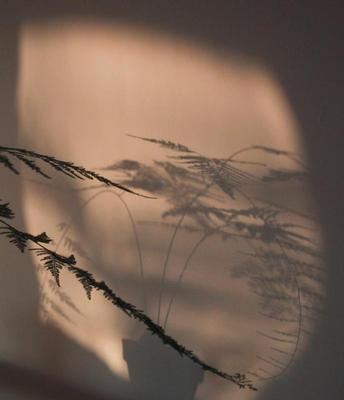 shadow of a fern on the wall